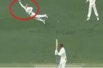 VIDEO : विकेट के पीछे एलेक्स कैरी ने लपका ऐसा कैच जिसे देख सब रह गए हैरान