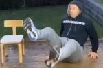 कुर्सी पर बैठते-बैठते अचानक नीचे गिरने लगे वाॅर्नर, वीडियो शेयर कर जताई हैरानी