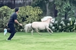 घोड़े के साथ रेस लगाते नजर आए धोनी, साक्षी ने स्लो-मोशन में शेयर किया VIDEO