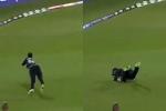 NZ vs PAK : डेवोन कॉनवे ने लपका अविश्वसनीय कैच, वीडियो हुआ वायरल