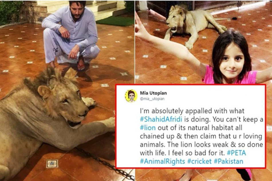 shahid afridi post a photo of chained lion