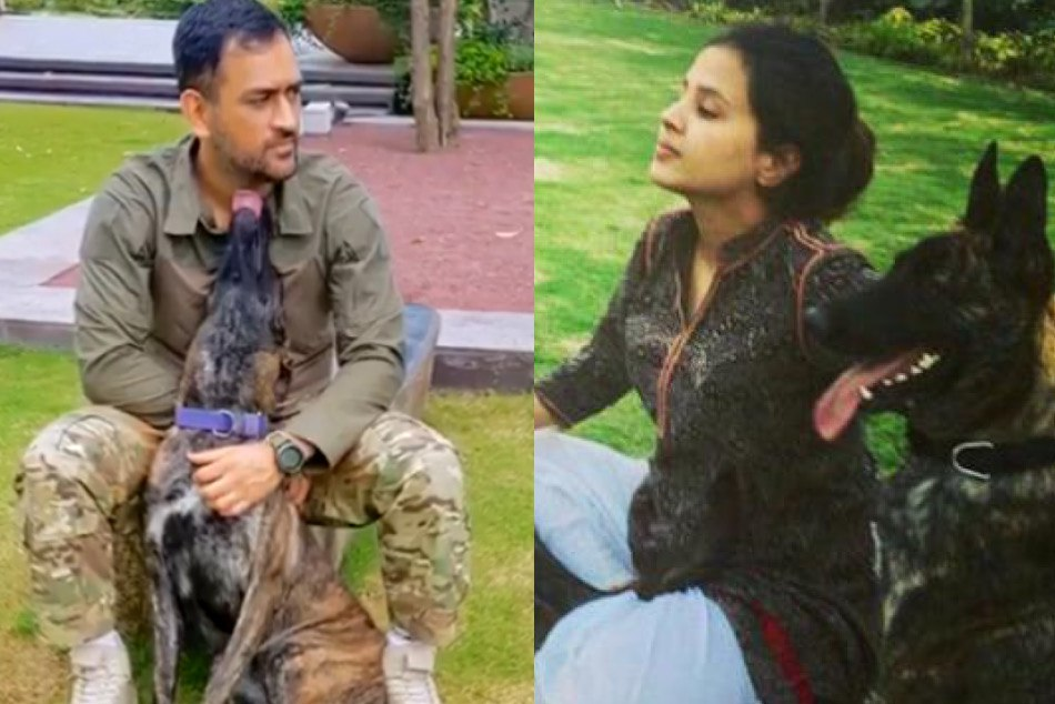 Ms Dhoni Is Enjoying With His Pet Dogs With Sakshi Dhoni