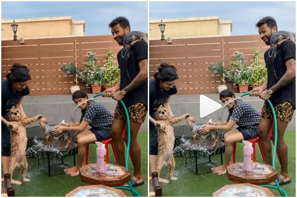 Hardik-Natasha enjoying lockdown time with dogs bathing- Video Viral