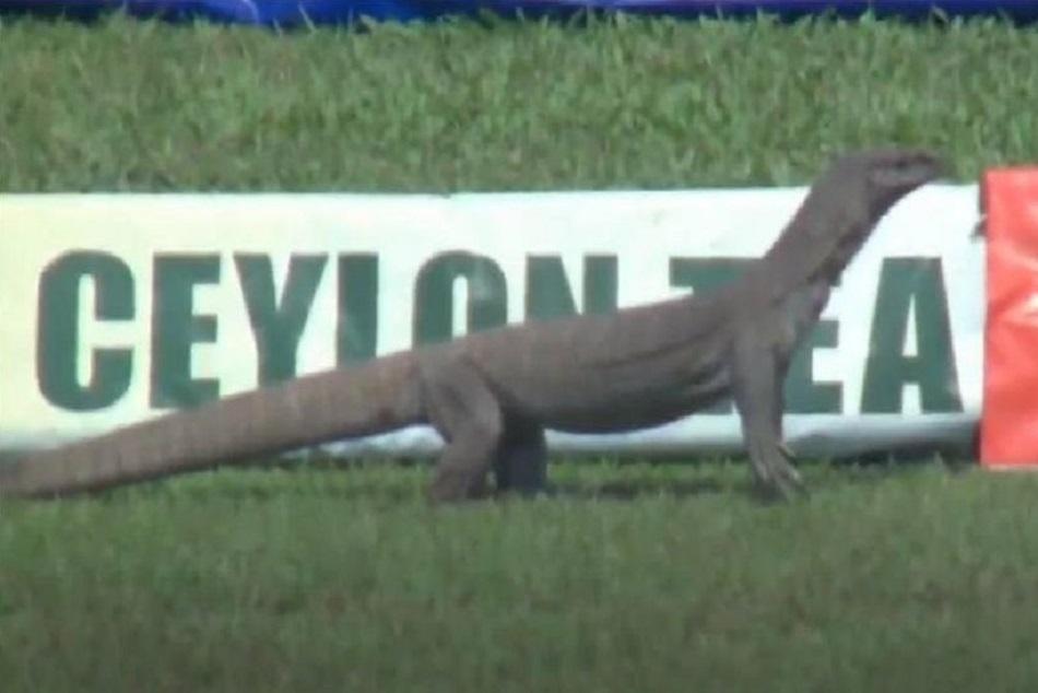 ENG vs SL : मैच के दाैरान दिखी बड़ी छिपकली, ICC ने फोटो शेयर कर लिए मजे