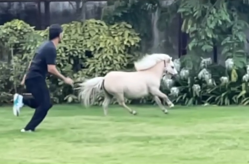 MS Dhoni races with his white pony, Sakshi Dhoni shares video in slow motion- Watch
