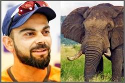 Virat Kohli Open Letter Relocation An Elephant From Jaipur