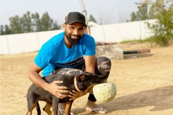 Mohammad Shami Shares Picture With His Pet Jack But Get Trolled On Social Media