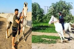 Ravindra Jadeja Turns Horse Rider Video Viral On Social Media