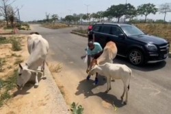 Shikhar Dhawan Wins Heart Feeds Food Hungry Cows Shares Video